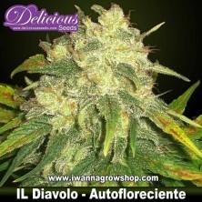 Il Diavolo – Autofloreciente – Delicious Seeds