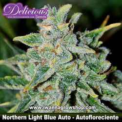 Northern Light Blue Auto – Autofloreciente – Delicious Seeds