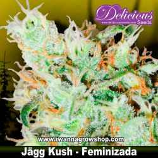 Jägg Kush – Feminizada – Delicious Seeds