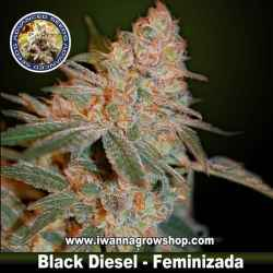 Black Diesel – Feminizada – Advanced Seeds