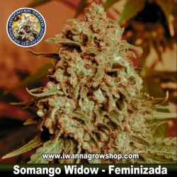 Somango Widow – Feminizada – Advanced Seeds