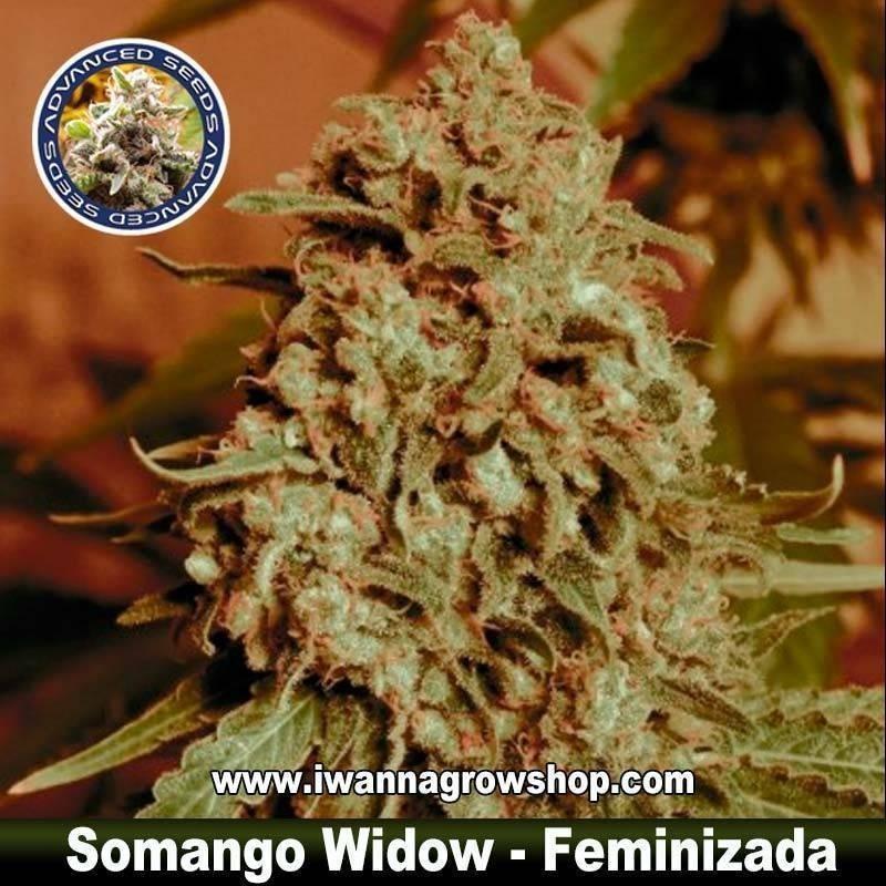 Somango Widow