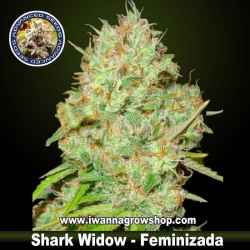 Shark Widow – Feminizada – Advanced Seeds