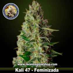 Kali 47– Feminizada – Advanced Seeds