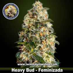 Heavy Bud – Feminizada – Advanced Seeds