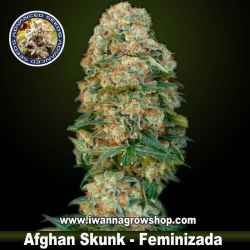 Afghan Skunk – Feminizada – Advanced Seeds