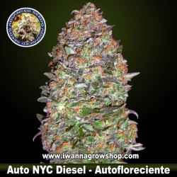 Auto NYC Diesel – Advanced Seeds - Autofloreciente