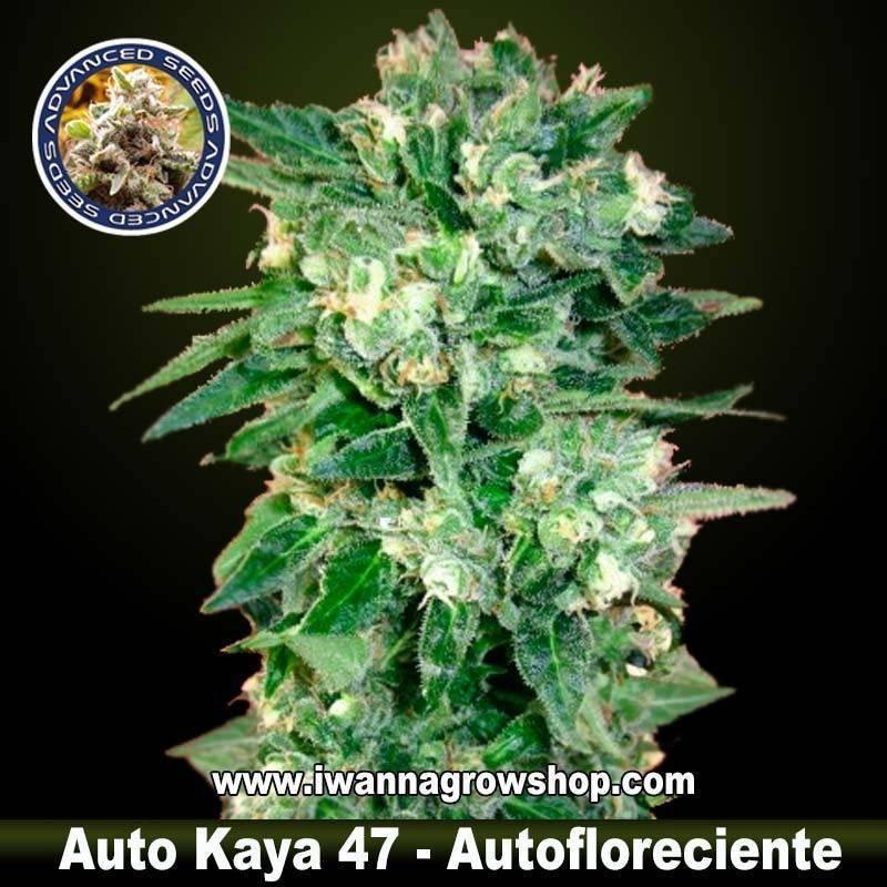 Auto Kaya 47