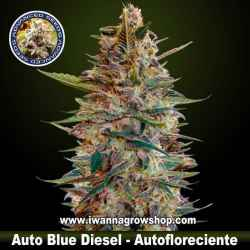 Auto Blue Diesel – Autofloreciente – Advanced Seeds