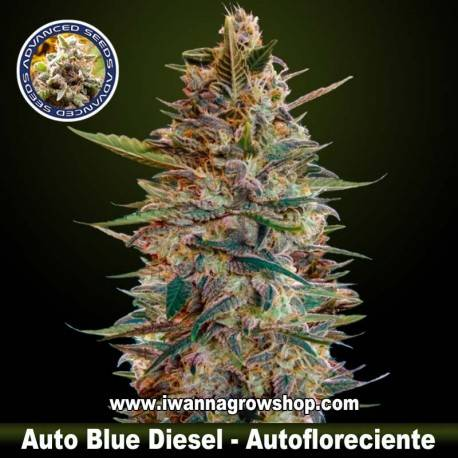 Auto Blue Diesel - Advanced Seeds - Autofloreciente