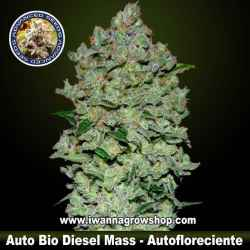 Auto Bio Diesel Mass – Autofloreciente – Advanced Seeds