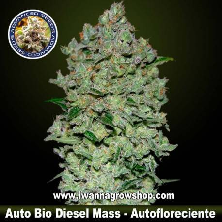 Auto Bio Diesel Mass - Advanced Seeds - Autofloreciente