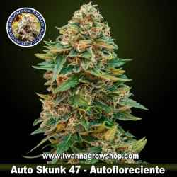 Auto Skunk 47 – Autofloreciente – Advanced Seeds