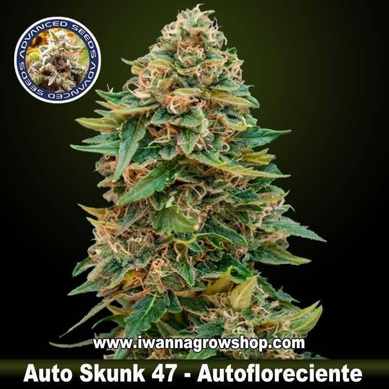 Auto Skunk 47