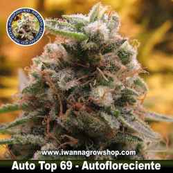 Auto Top 69 – Autofloreciente – Advanced Seeds