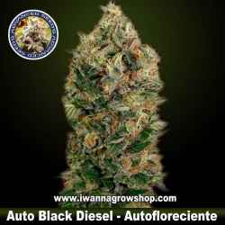 Auto Black Diesel – Autofloreciente – Advanced Seeds