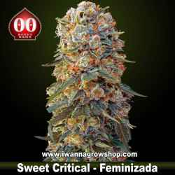 Sweet Critical – Feminizada – 00 Seeds