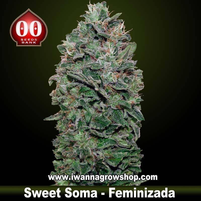 Sweet Soma