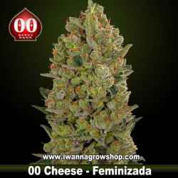 00 Cheese – Feminizada – 00 Seeds