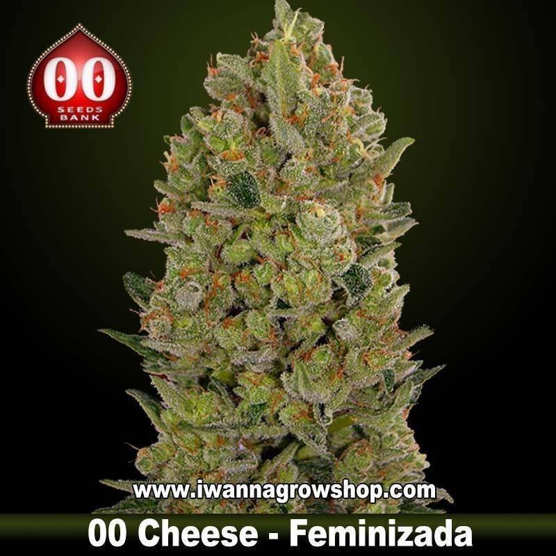 00 Cheese