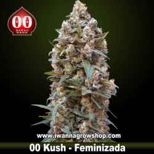 00 Kush – Feminizada – 00 Seeds