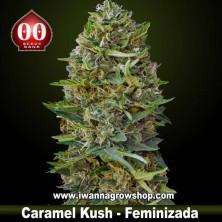 Caramel Kush – Feminizada – 00 Seeds