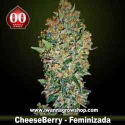 Cheese Berry – Feminizada – 00 Seeds