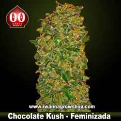 Chocolate Kush – Feminizada – 00 Seeds