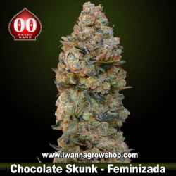 Chocolate Skunk