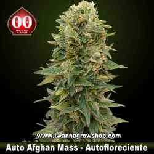 Auto Afghan Mass