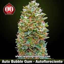 Auto Bubble Gum – Autofloreciente – 00 Seeds