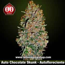 Auto Chocolate Skunk – Autofloreciente – 00 Seeds
