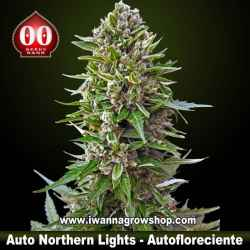 Auto Northern Lights – Autofloreciente – 00 Seeds