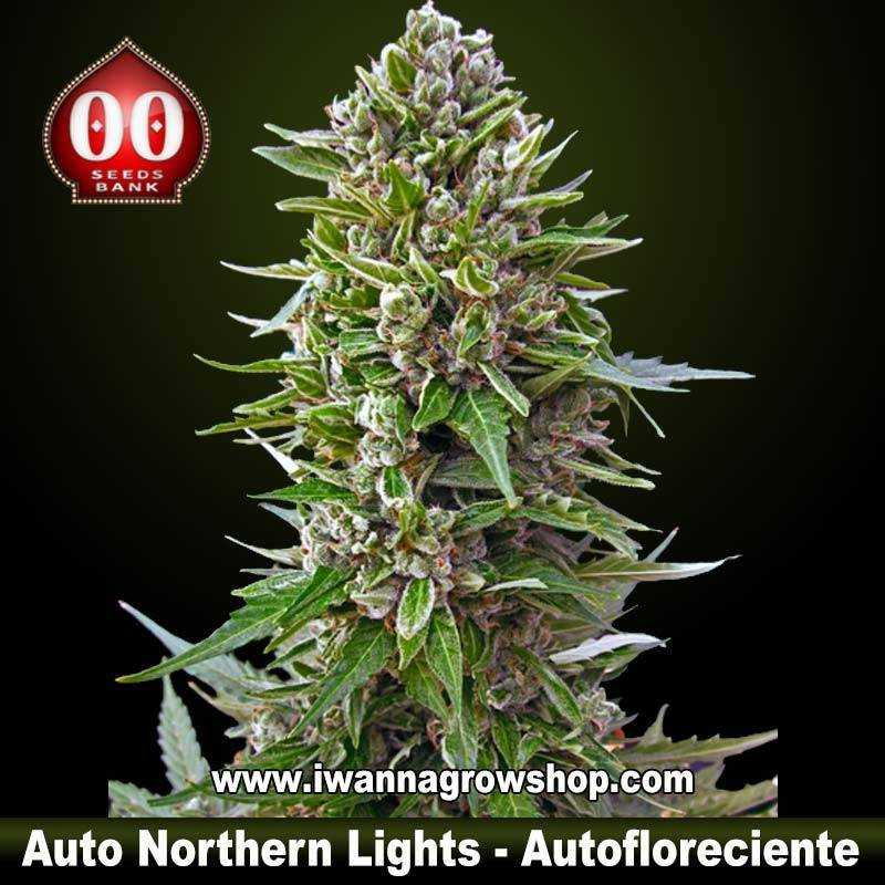 Auto northern lights 00 seeds autofloreciente indica for Autofloreciente interior