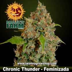 Chronic Thunder – Feminizada – Barney´s Farm