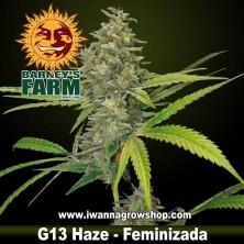 G13 Haze – Feminizada – Barney´s Farm