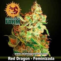 Red Dragon – Feminizada – Barney´s Farm