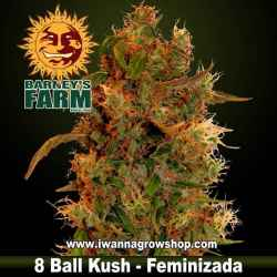 8 Ball Kush - Barneys Farm - Feminizada