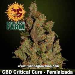 CBD Critical Cure