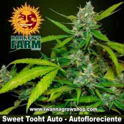Sweet Tooth Auto – Autofloreciente – Barney´s Farm