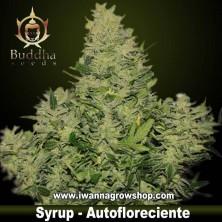 Syrup – Autofloreciente – Buddha Seeds