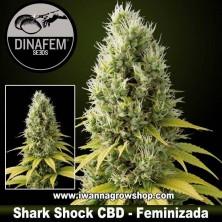 Shark Shock CBD – Feminizada – Dinafem Seeds