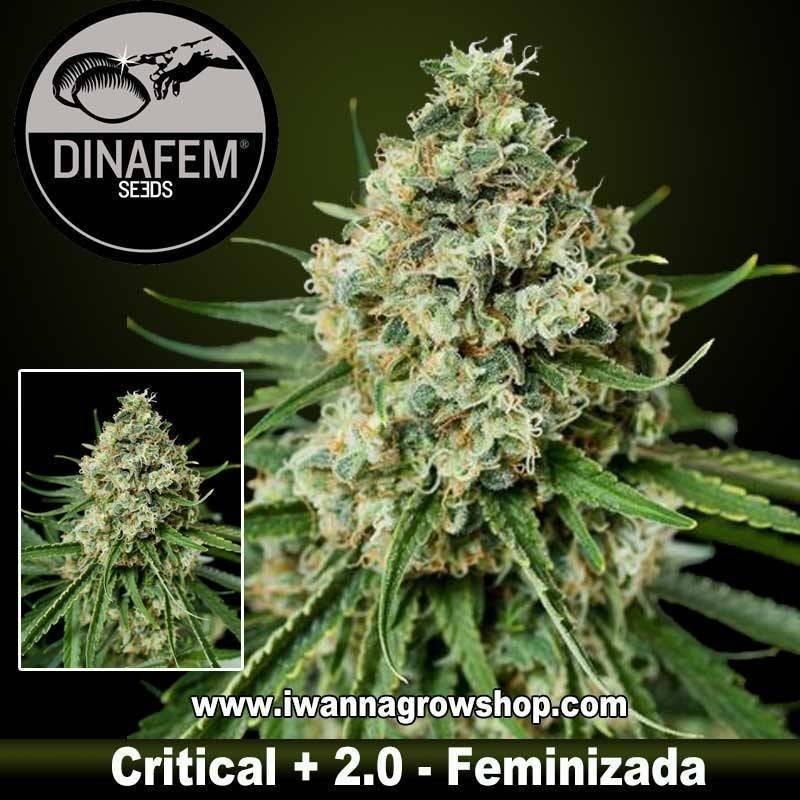 Critical+ 2.0
