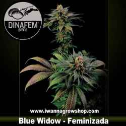 Blue Widow – Feminizada – Dinafem Seeds