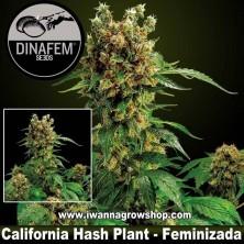 California Hash Plant – Feminizada – Dinafem Seeds