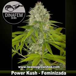 Power Kush – Feminizada – Dinafem Seeds