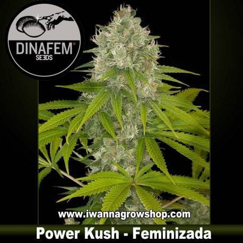 Power Kush feminizada Dinafem 1, 3, 5 y 10 u.