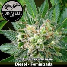 Diesel – Feminizada – Dinafem Seeds