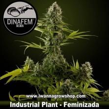 Industrial Plant – Feminizada – Dinafem Seeds