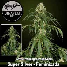 Super Silver – Feminizada